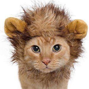 Lion Mane Cat Costume - Brand New in plastic